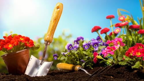 Gardening & Potted Plants