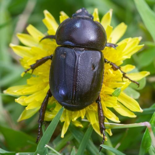 Pests & Weeds